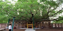 Bodhgaya Special Buddhist Tour Package India